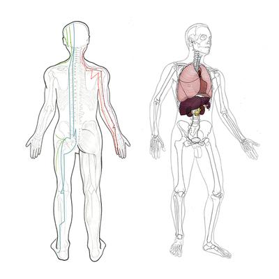 Estructuras corporales