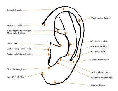 Puntos anatomicos auricula