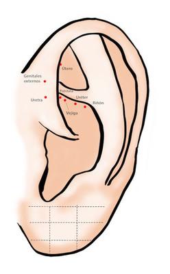 Puntos del sistema urogenital y reproductivo - auriculoterapia